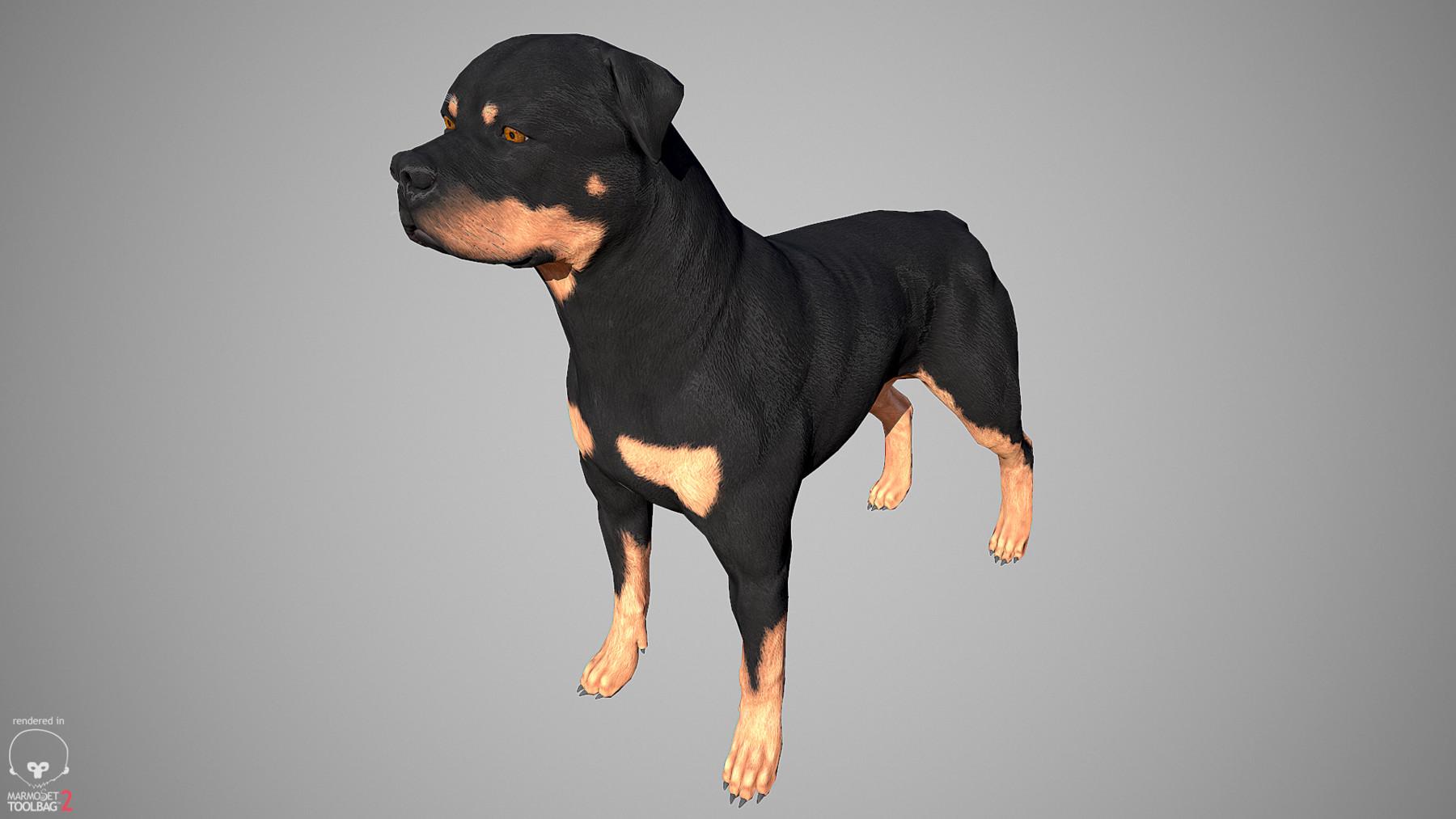 Rottweiler by alexlashko marmoset 06