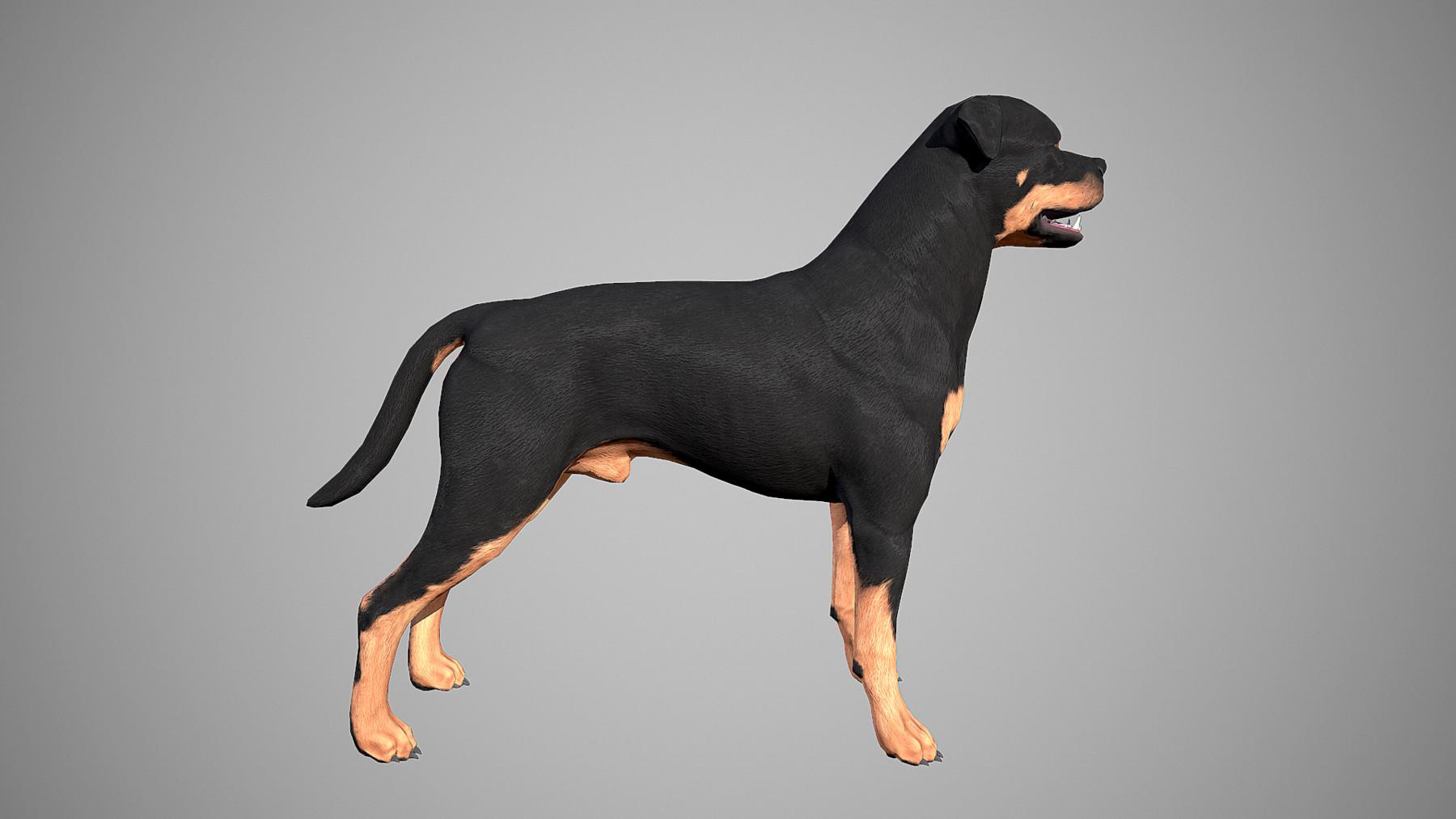 Rottweiler by alexlashko marmoset 18