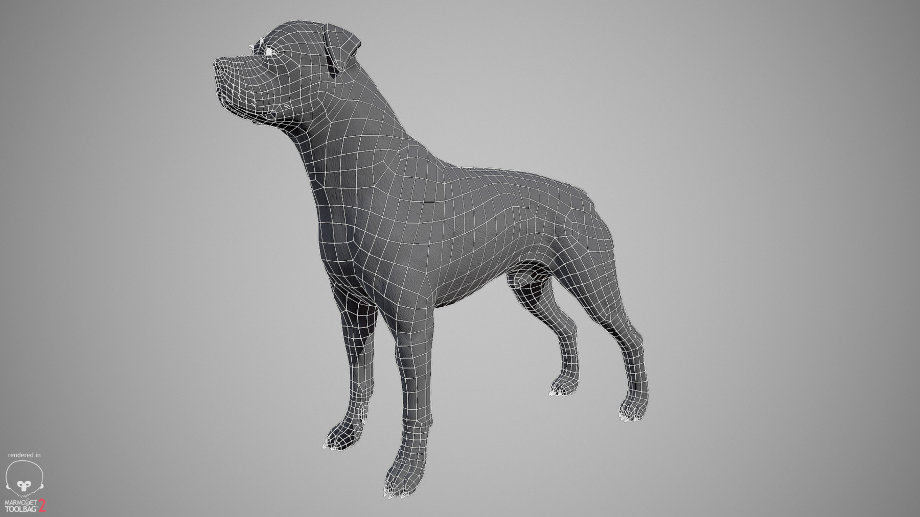 Rottweiler by alexlashko wireframe 01
