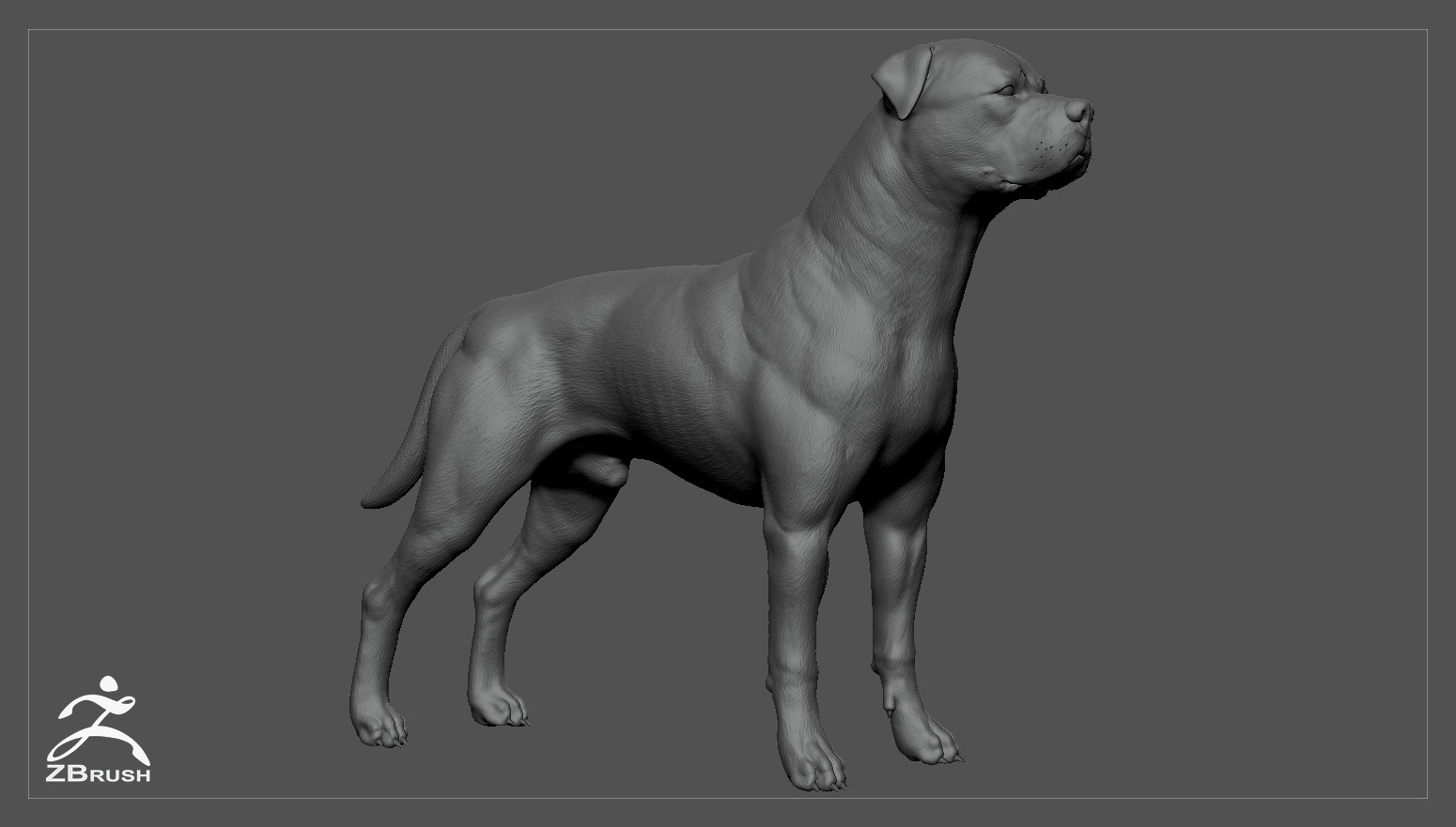 Rottweiler zbrush 01