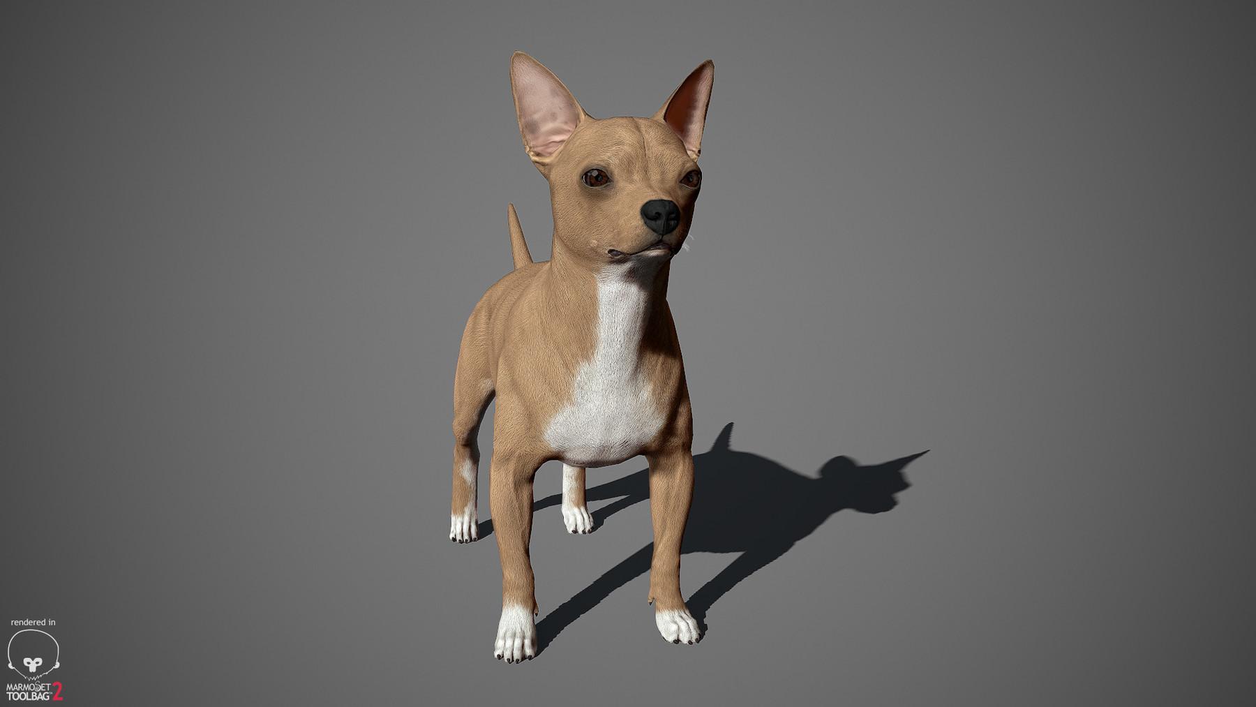 Chihuahua by alexlashko marmoset 05