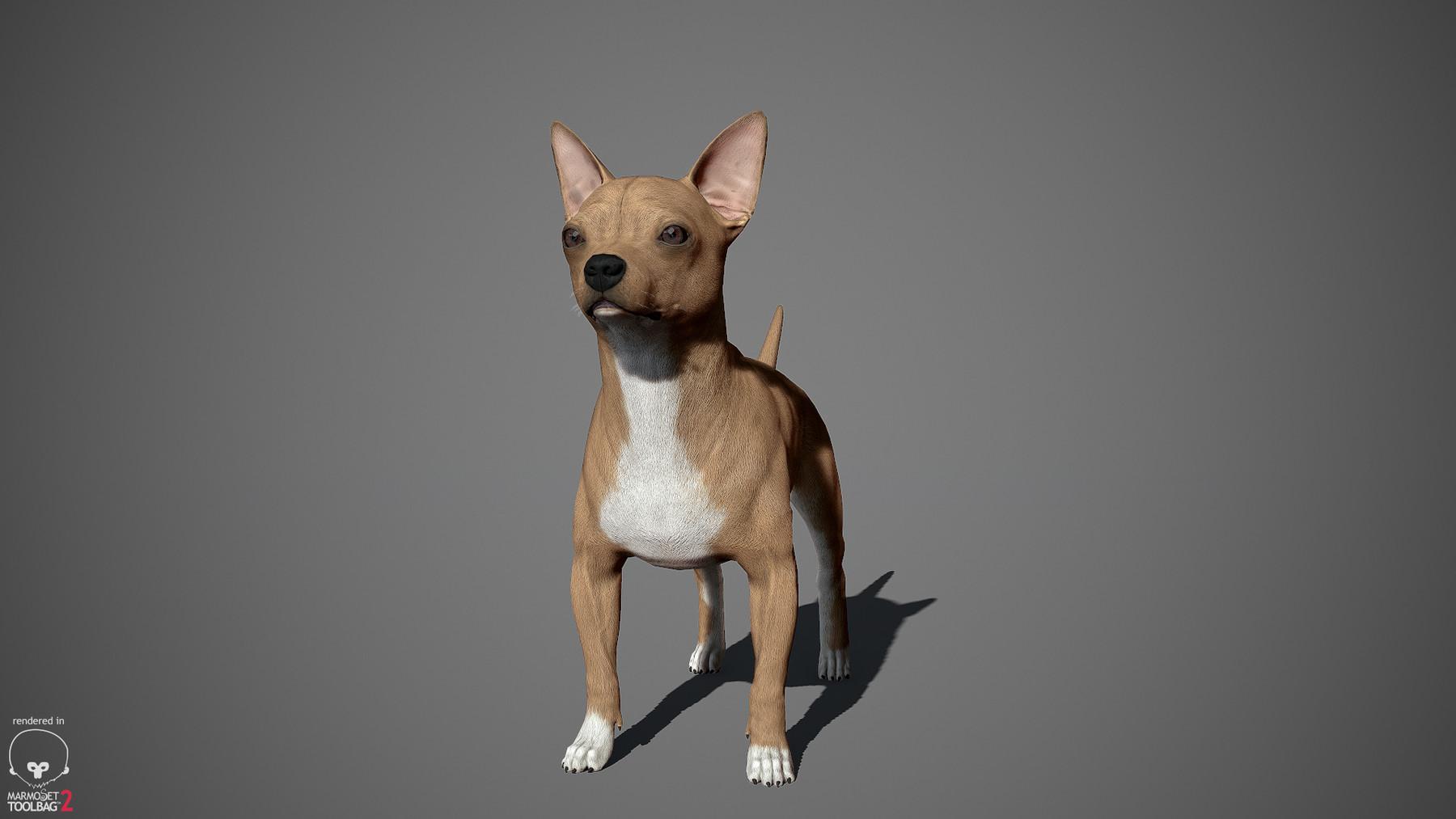 Chihuahua by alexlashko marmoset 07