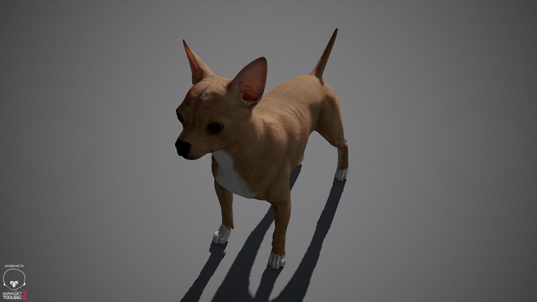 Chihuahua by alexlashko marmoset 09