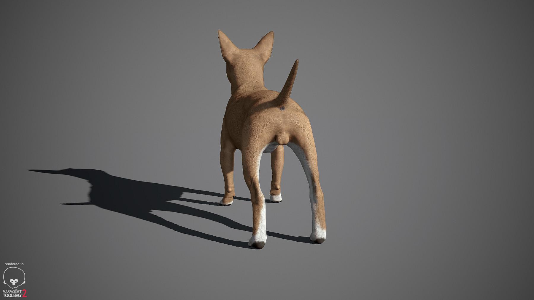 Chihuahua by alexlashko marmoset 11