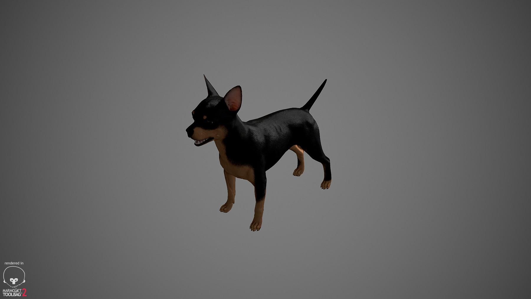 Chihuahua by alexlashko marmoset 29