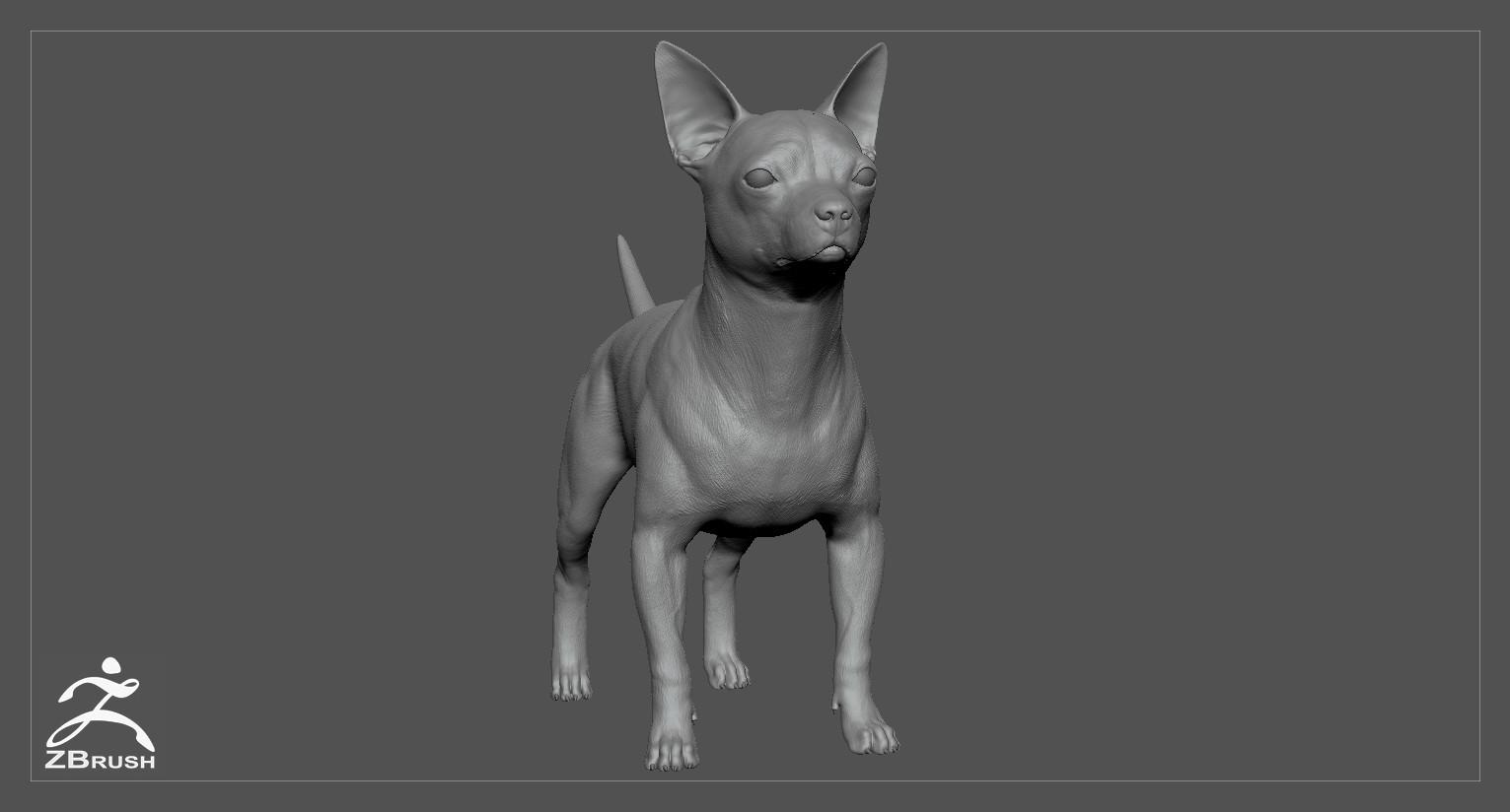 Chihuahua by alexlashko zbrush 02
