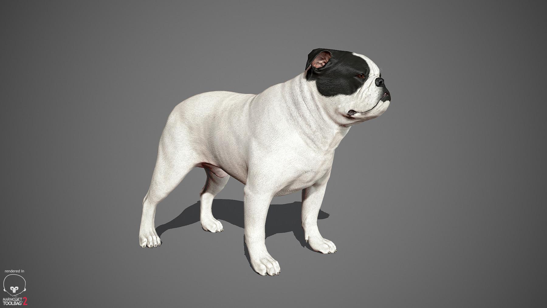 Englishbulldog by alexlashko marmoset 04
