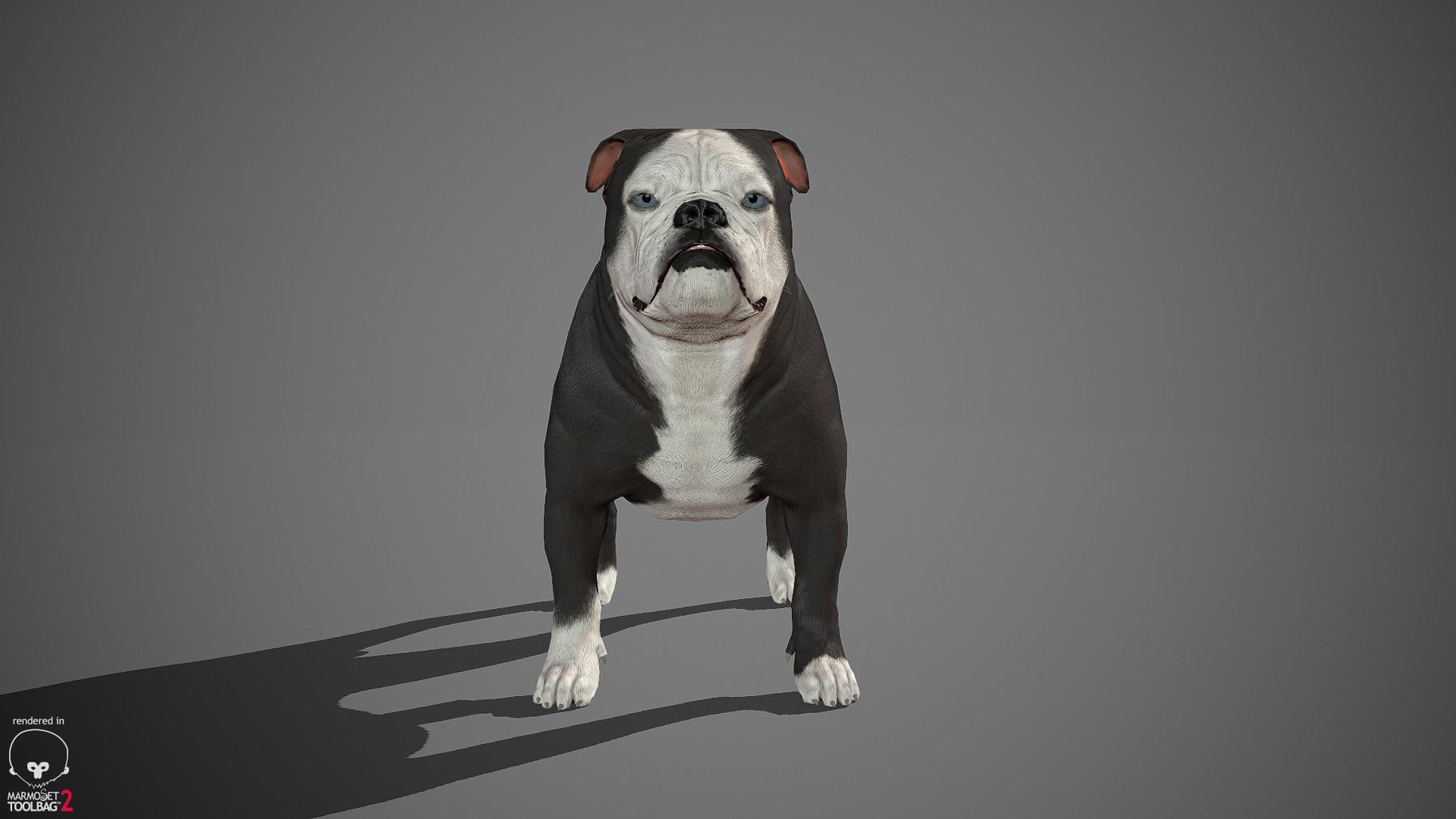 Englishbulldog by alexlashko marmoset 06