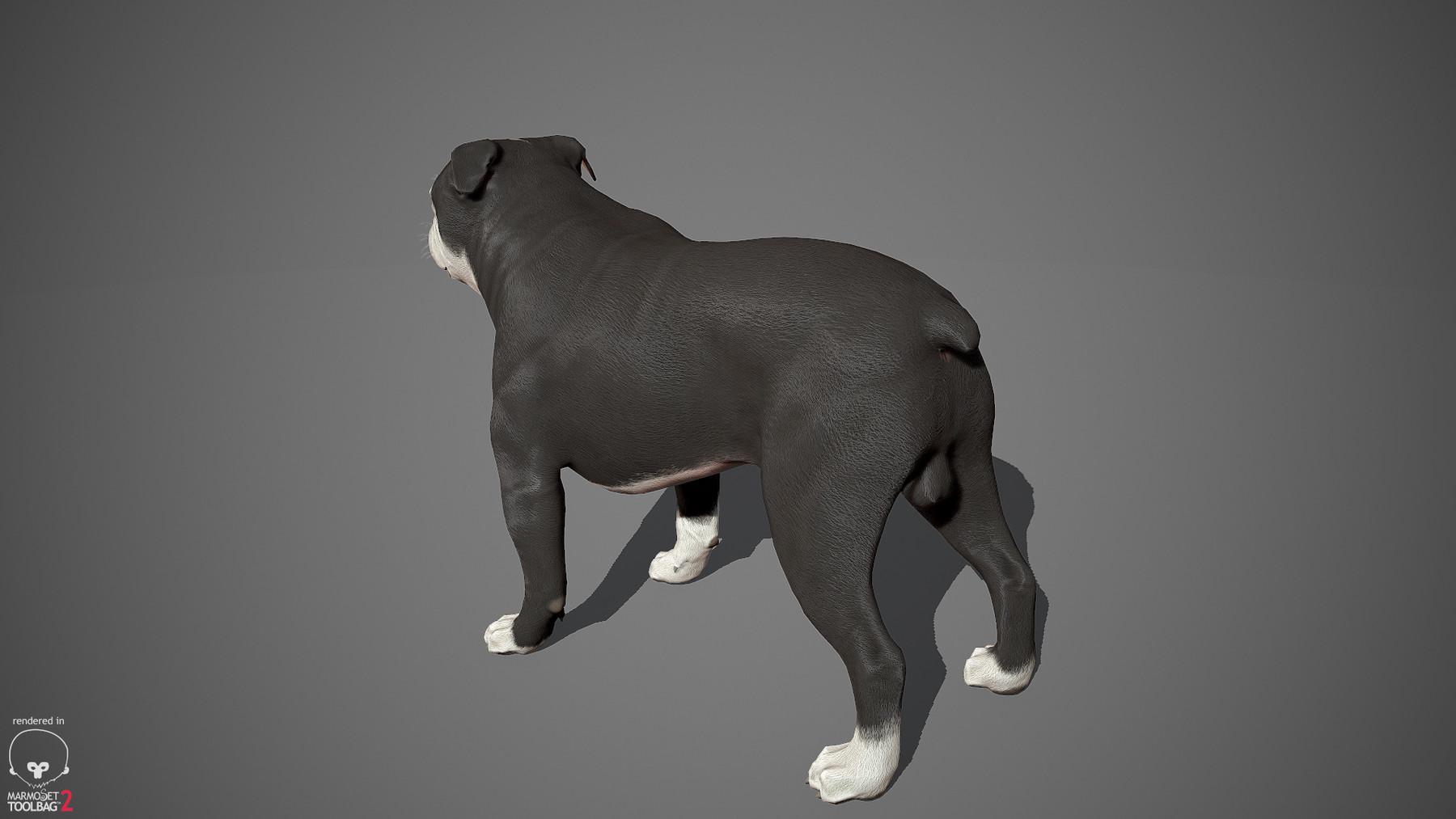 Englishbulldog by alexlashko marmoset 12