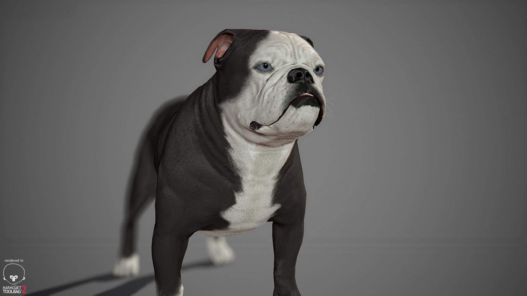 Englishbulldog by alexlashko marmoset 18