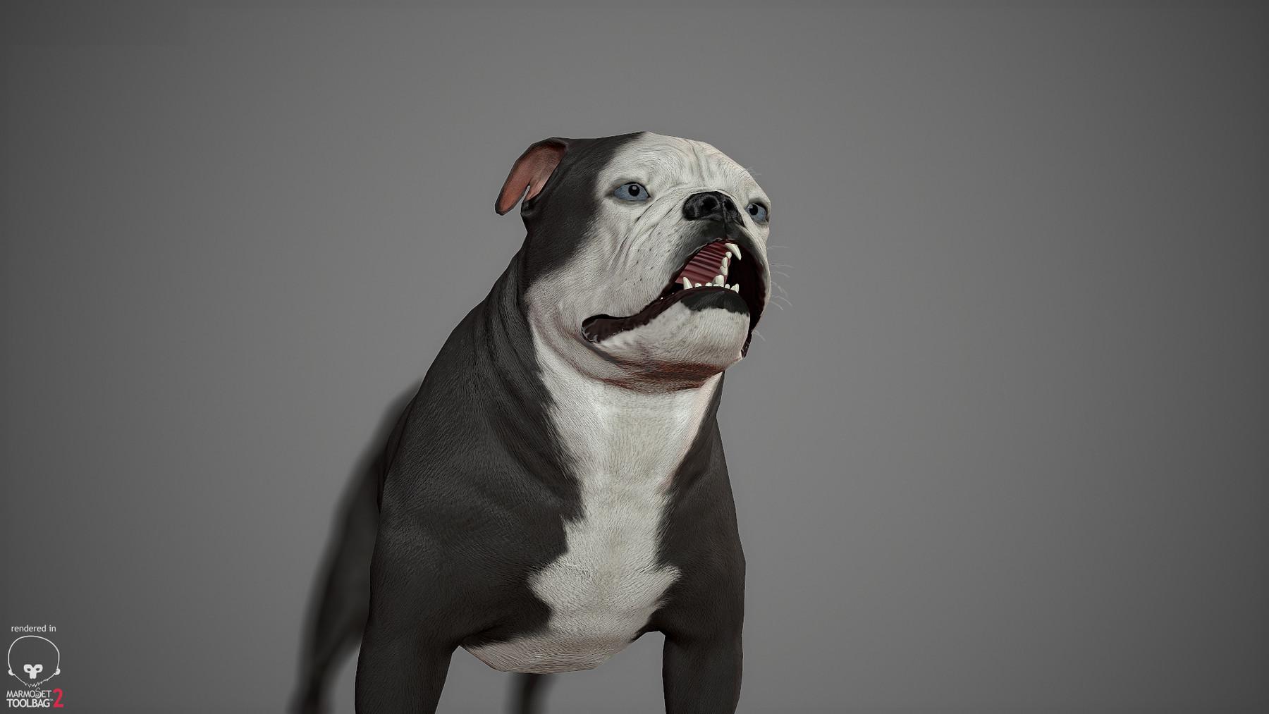 Englishbulldog by alexlashko marmoset 20