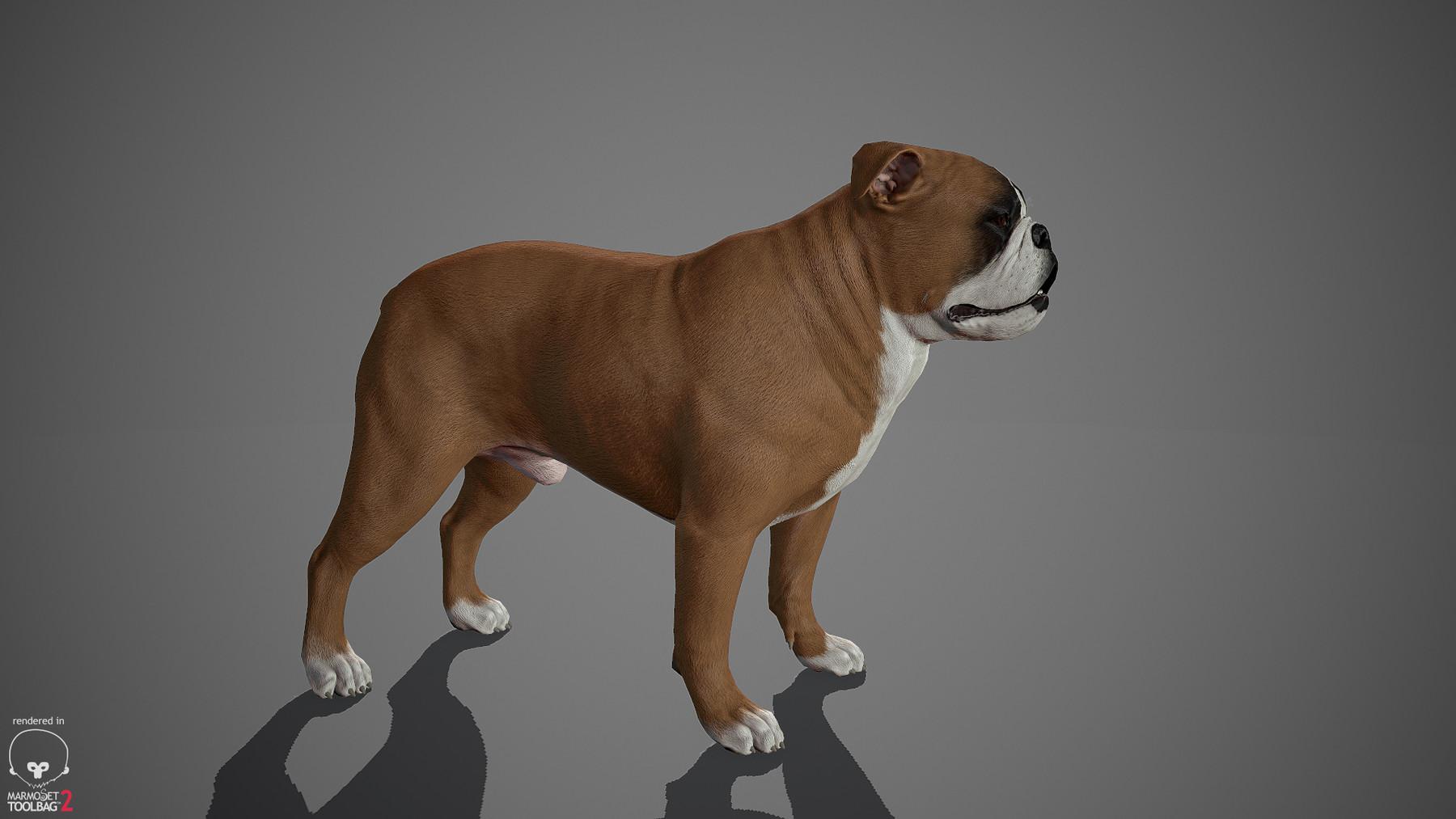 Englishbulldog by alexlashko marmoset 22