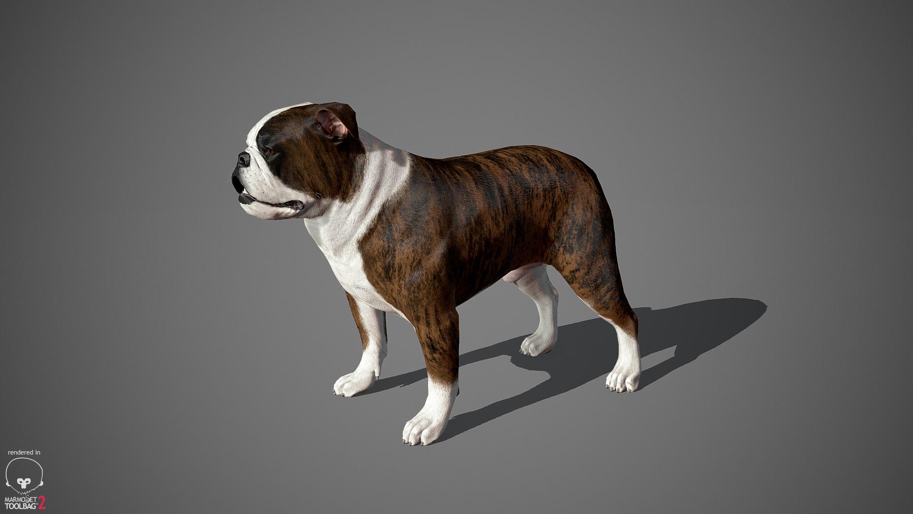 Englishbulldog by alexlashko marmoset 27