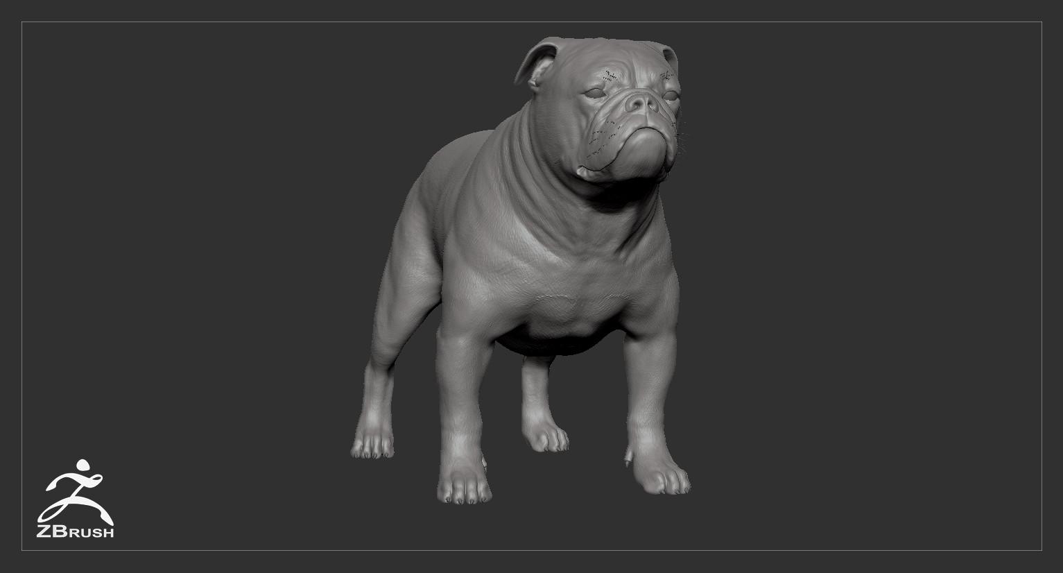 Englishbulldog by alexlashko zbrush 02