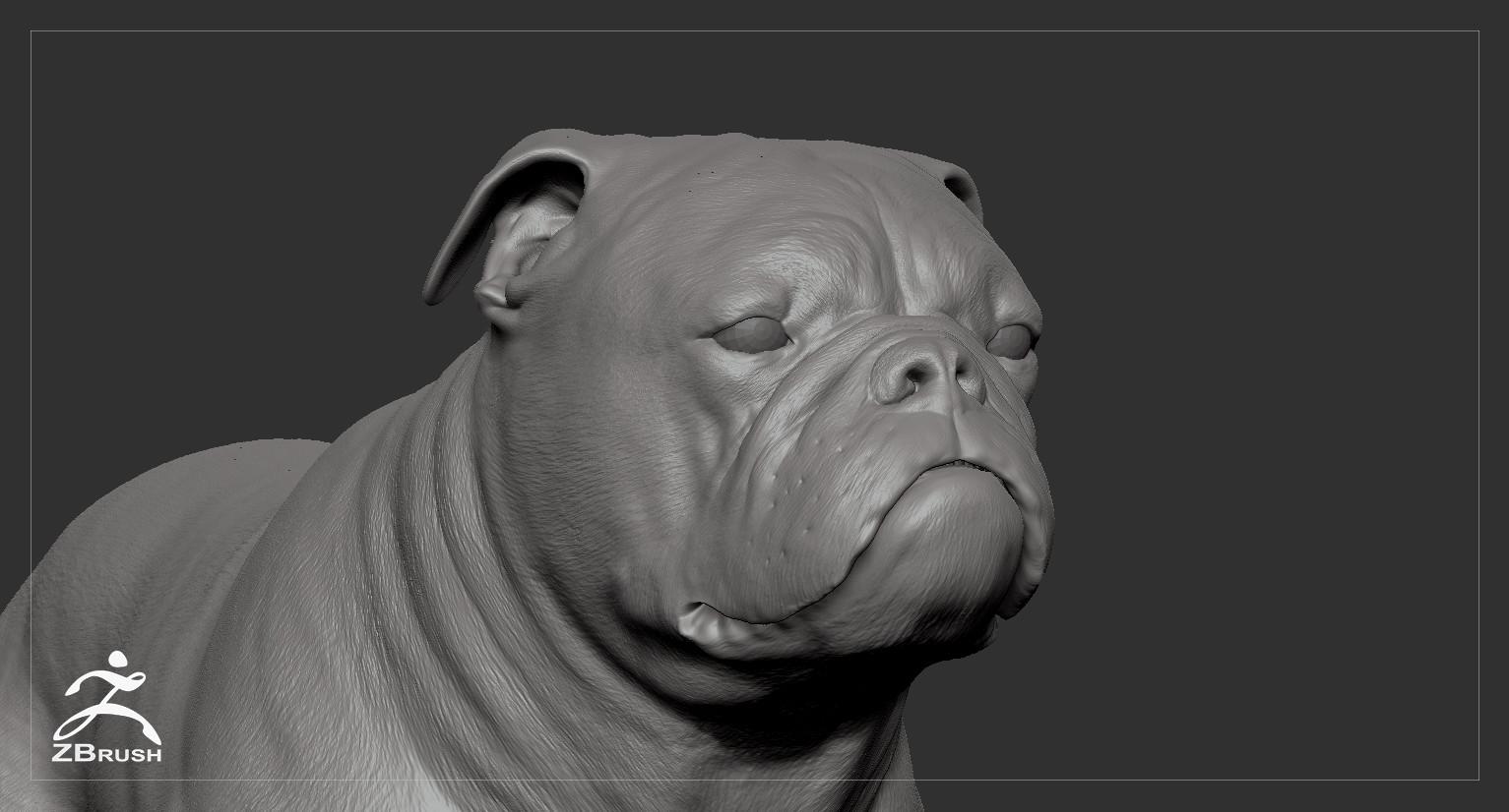 Englishbulldog by alexlashko zbrush 06