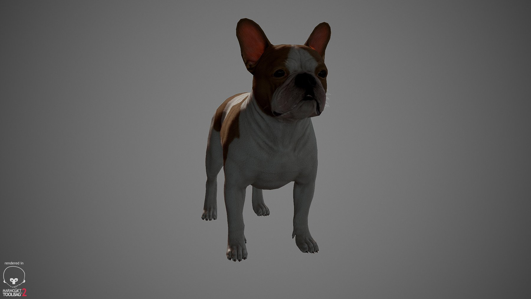 Frenchbulldog by alexlashko marmoset 10