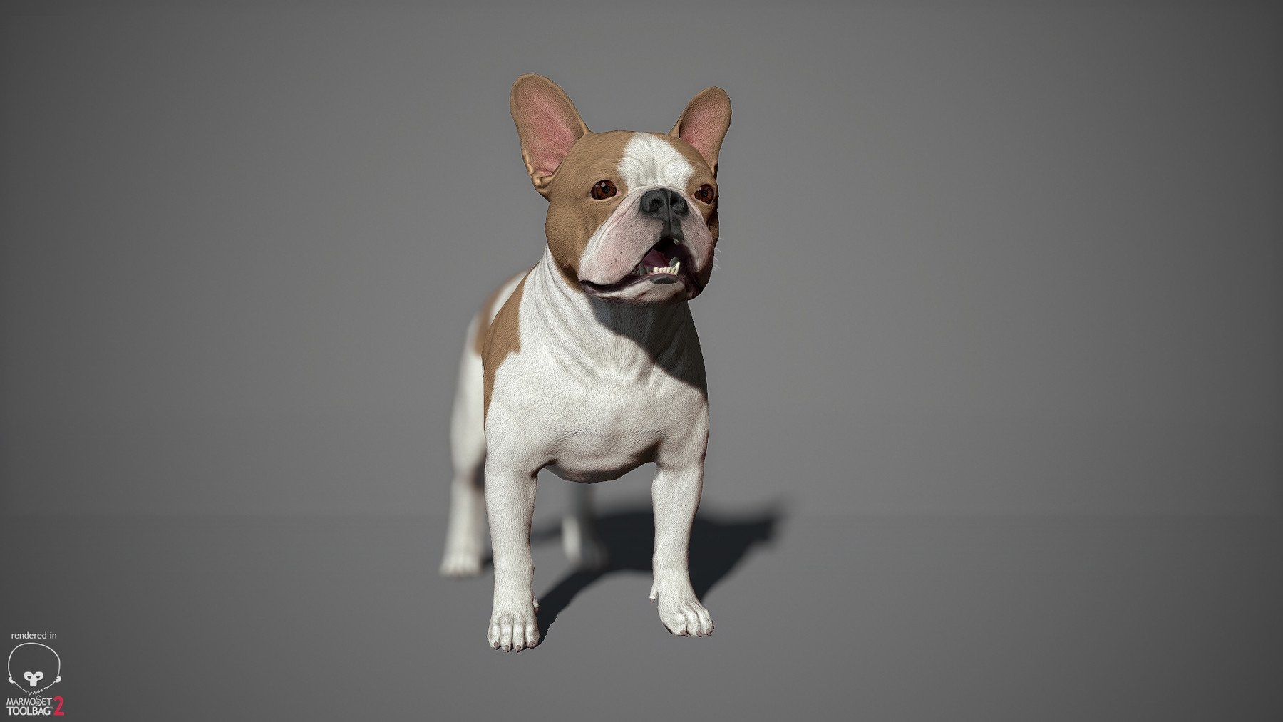 Frenchbulldog by alexlashko marmoset 14