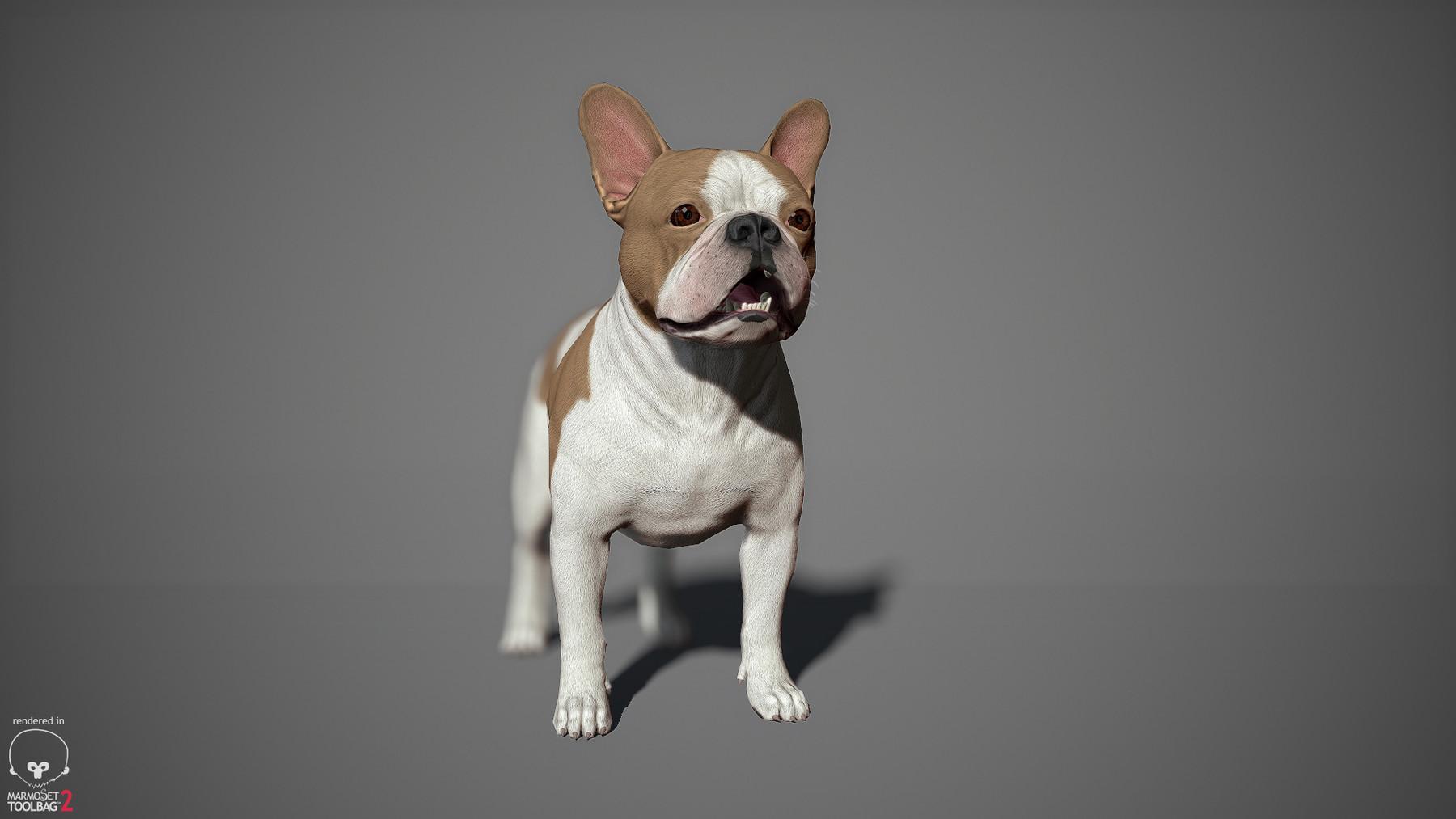 Frenchbulldog by alexlashko marmoset 14