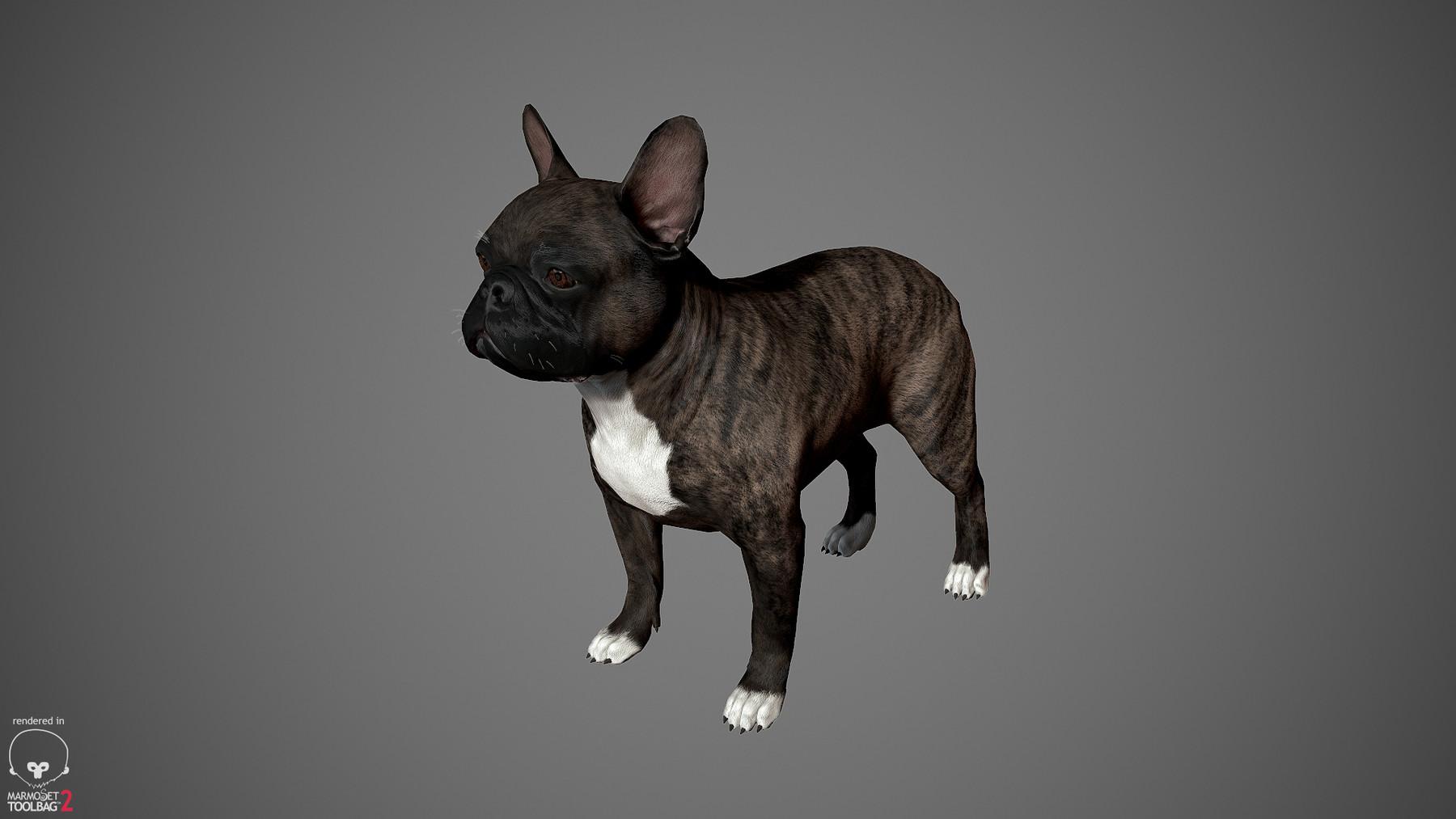 Frenchbulldog by alexlashko marmoset 18