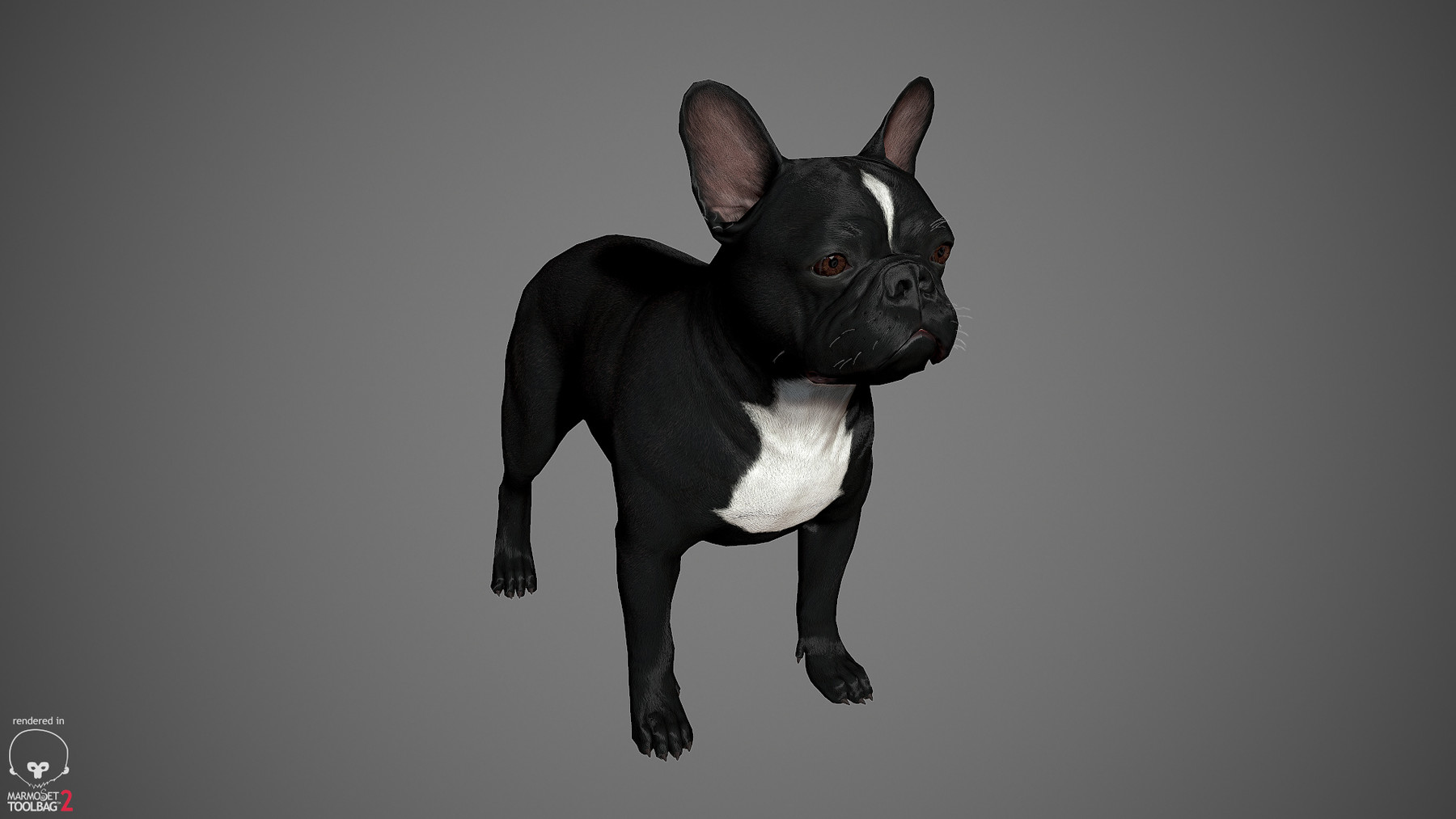 Frenchbulldog by alexlashko marmoset 19
