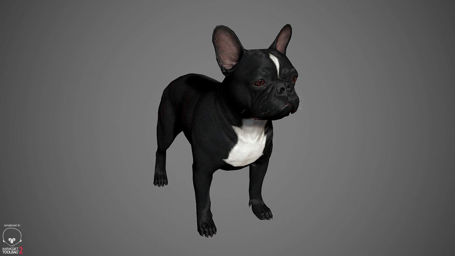 Frenchbulldog by alexlashko marmoset 19
