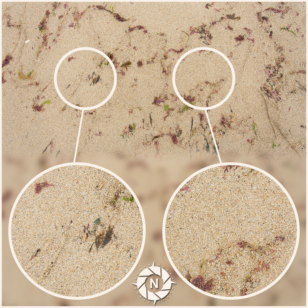 Texture reference pack beach sand 7