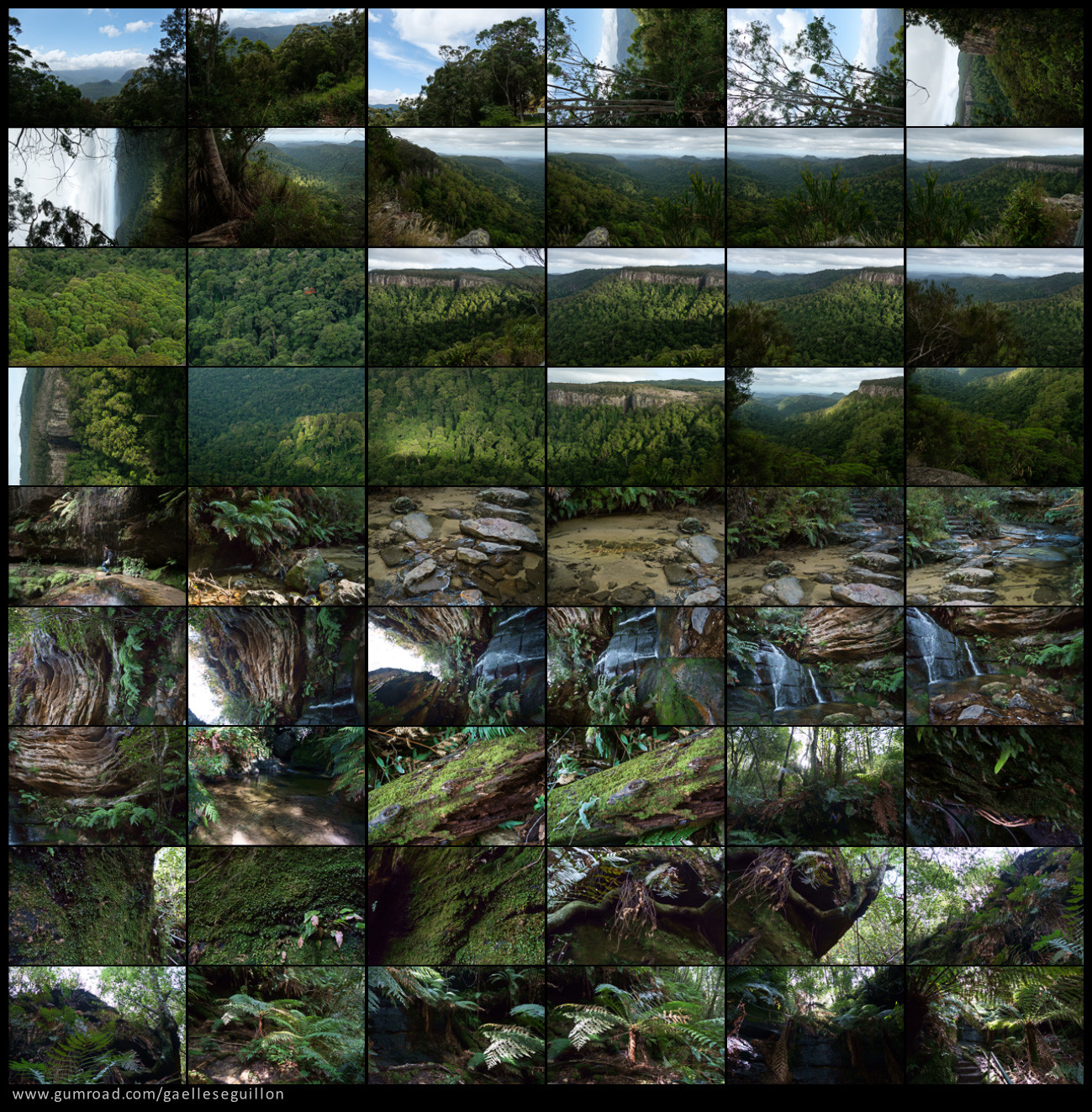 Australian rainforest preview 01