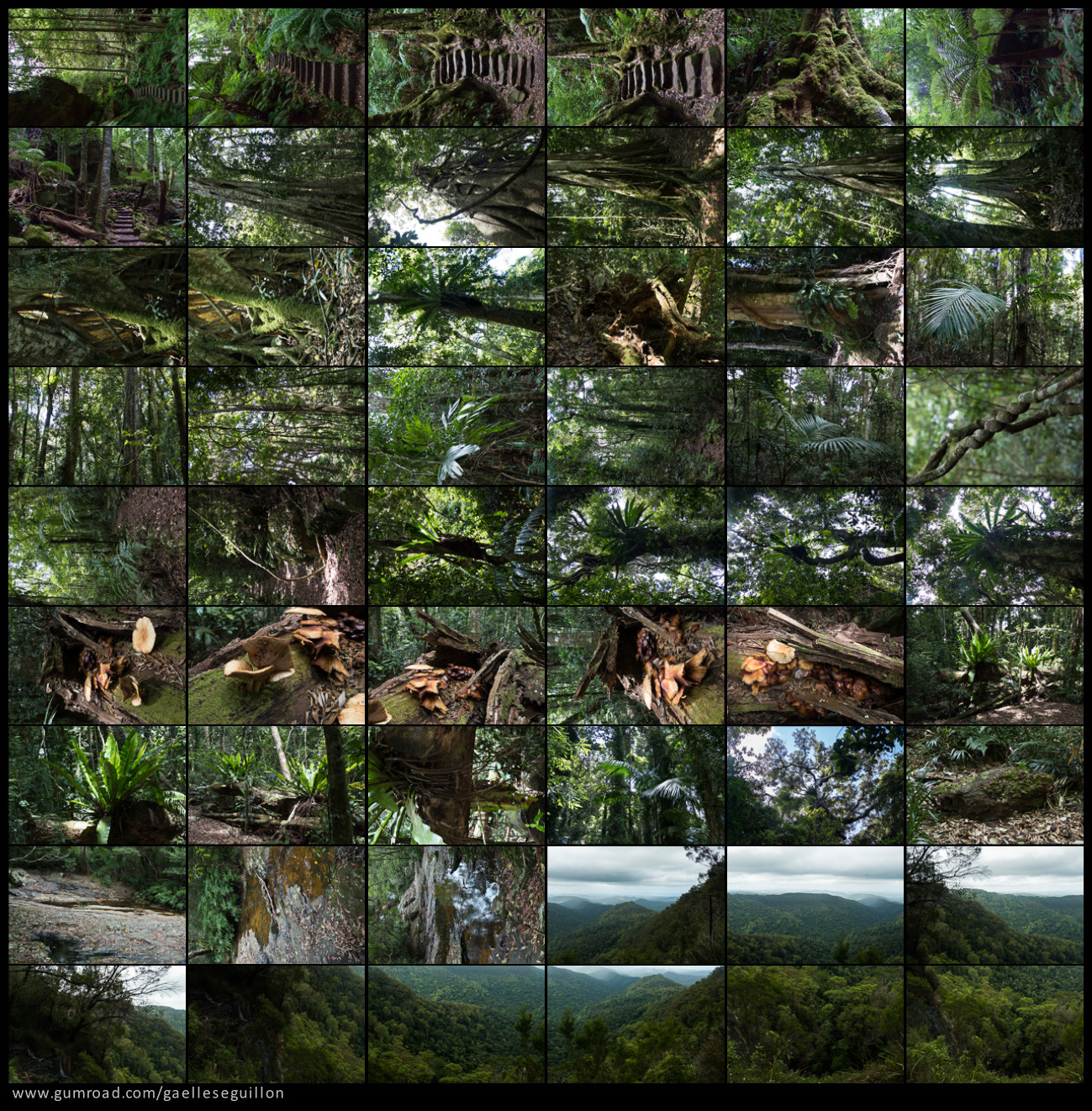 Australian rainforest preview 06