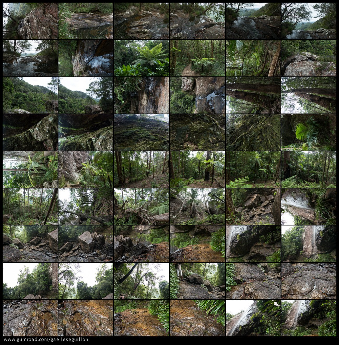 Australian rainforest preview 07