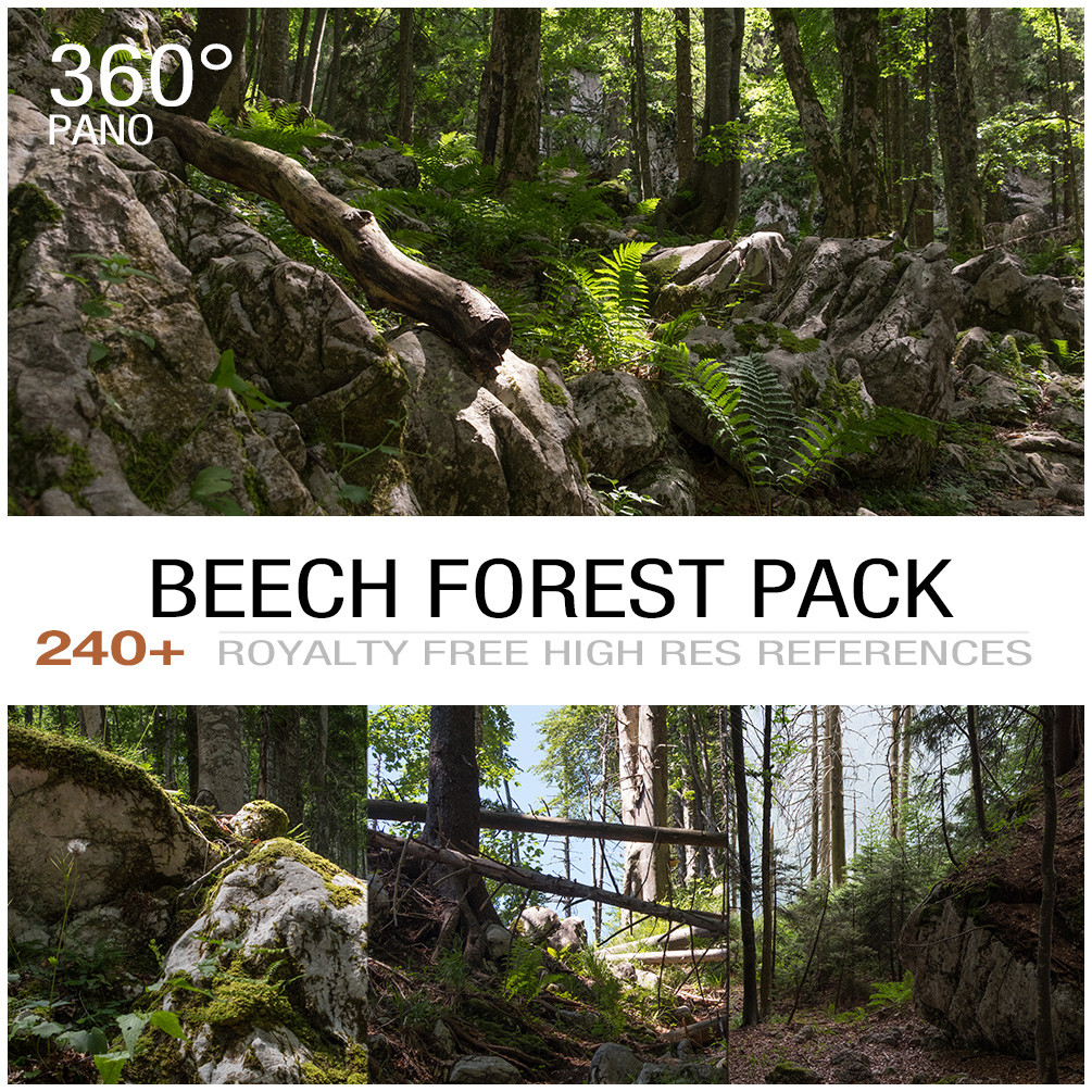 Beech forest cover 2
