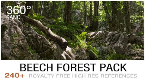Beech forest cover2