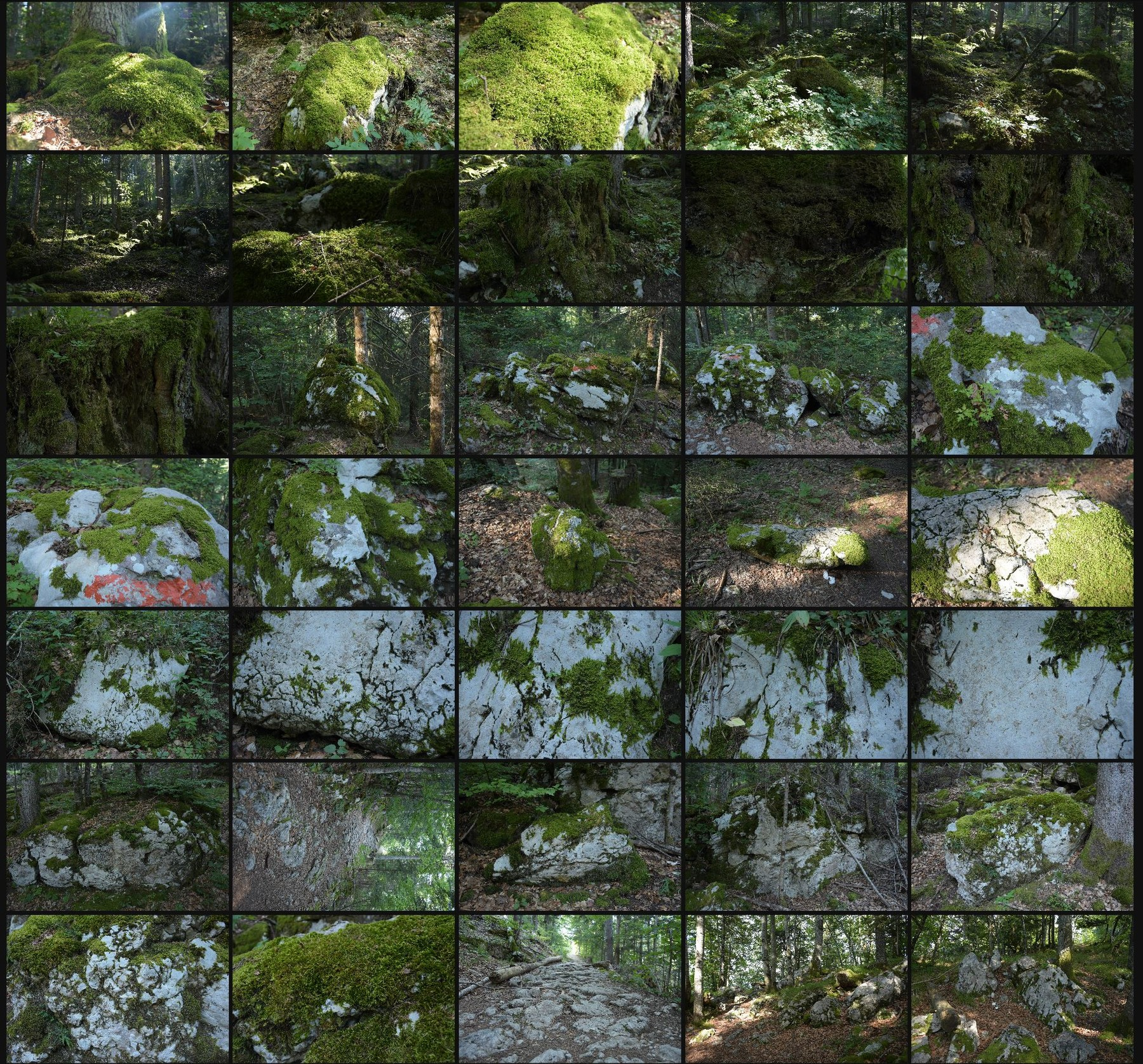 Photo reference pack alpine forest 2