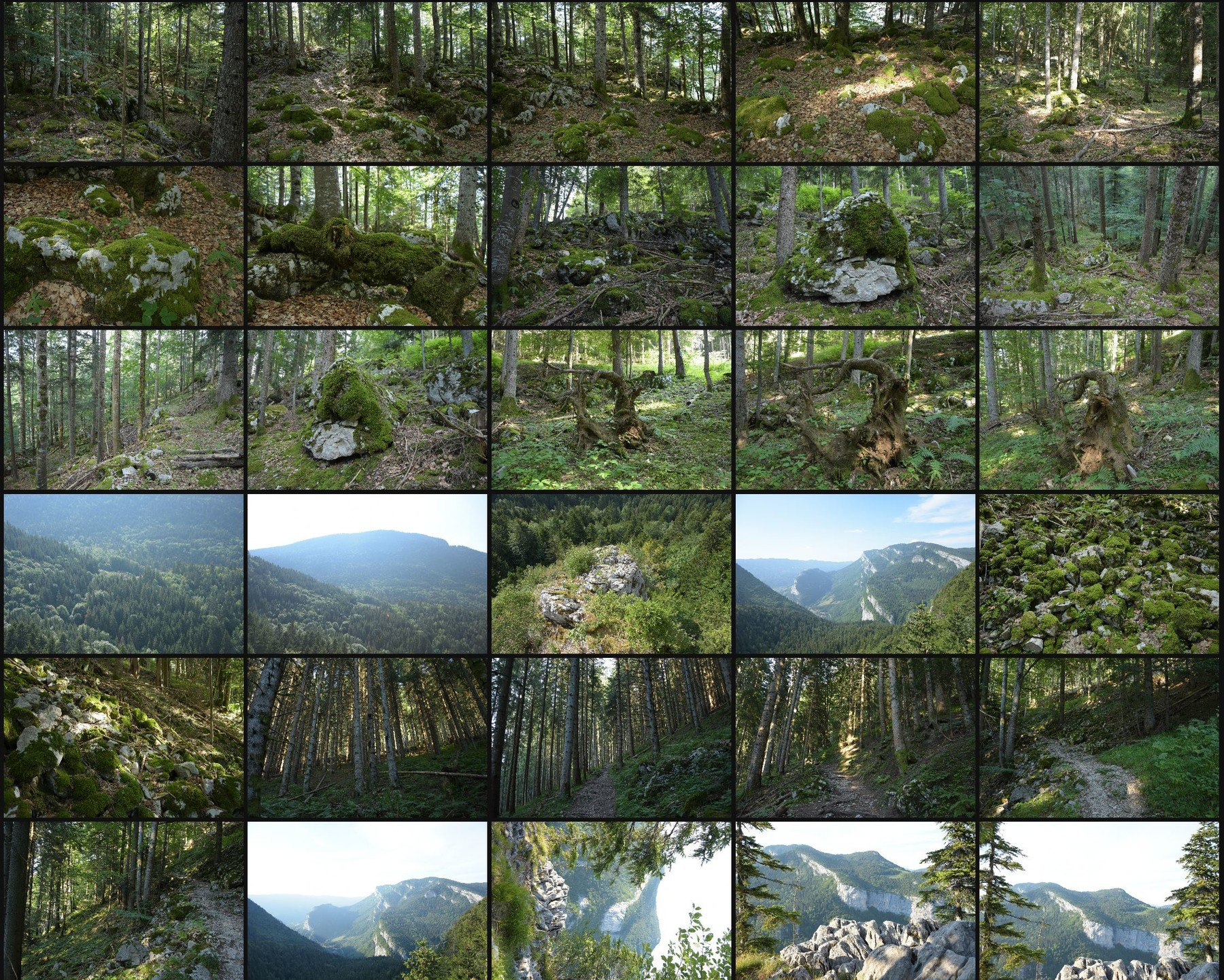 Photo reference pack alpine forest 4