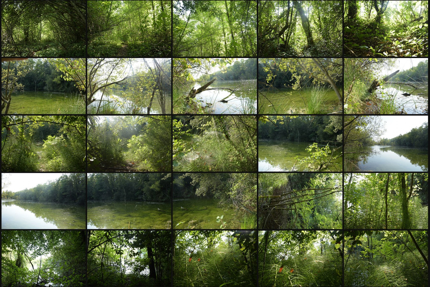 Photo reference pack swamp 4