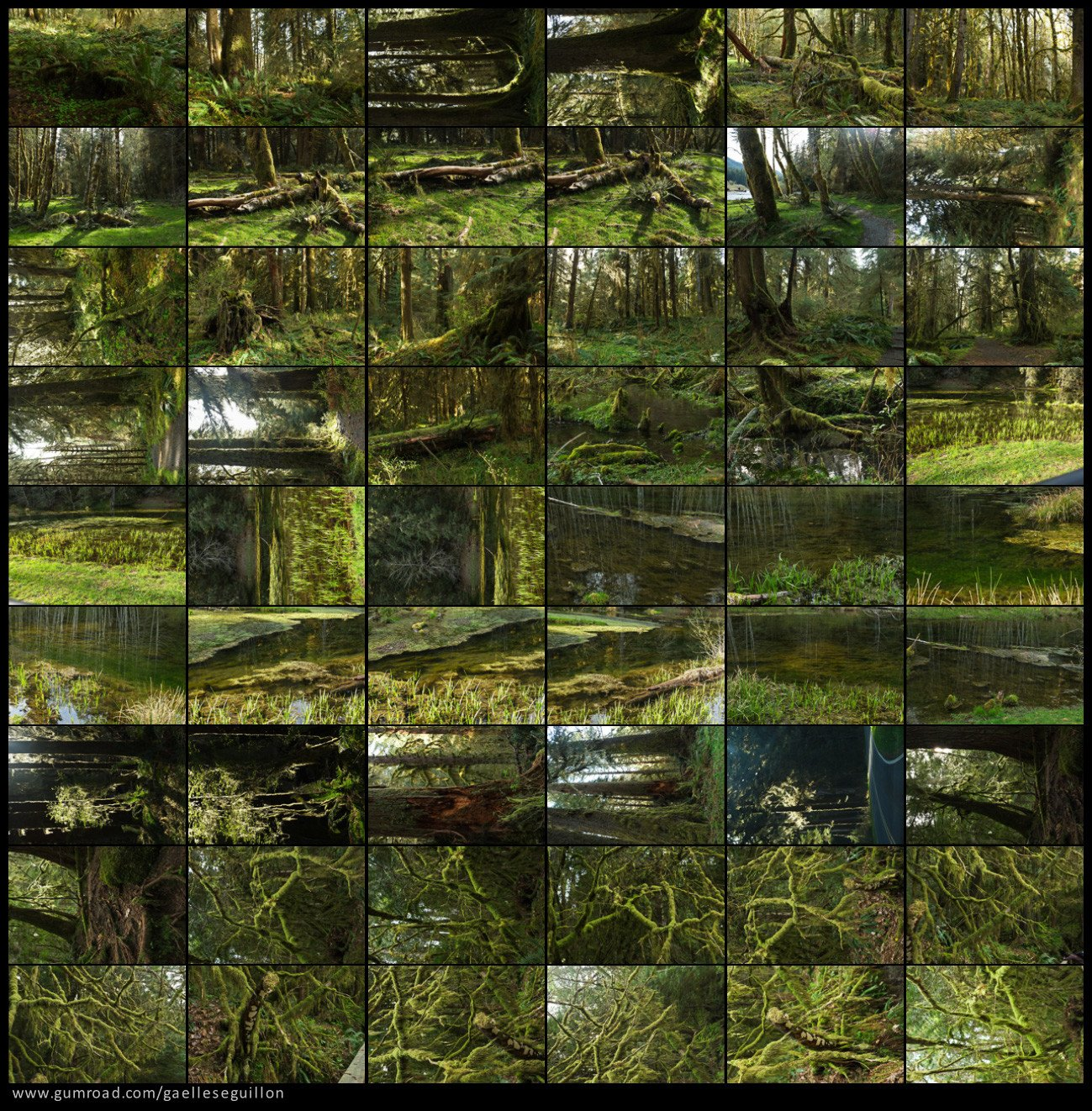 Mossy rainforest preview 4