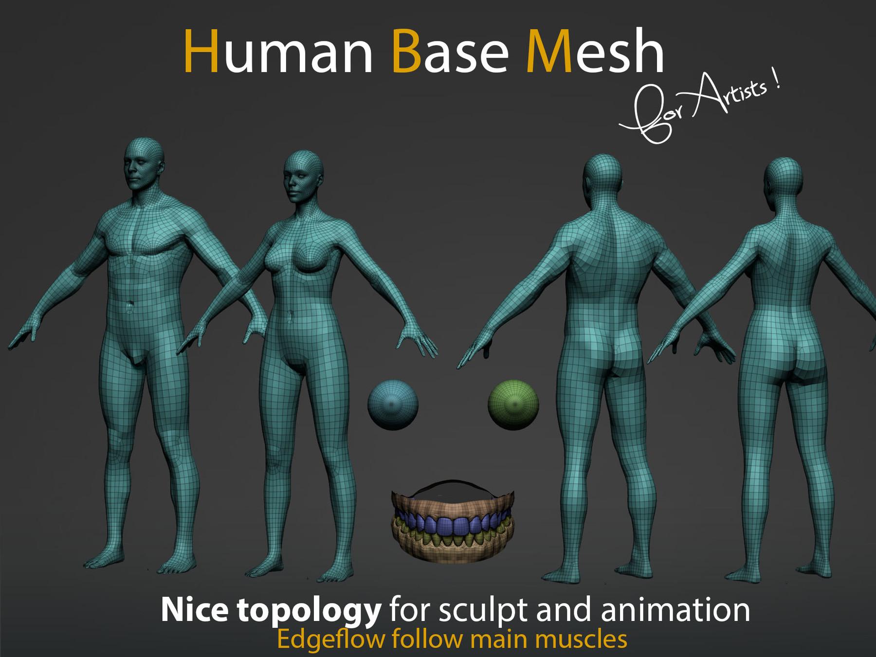 Human bm img2