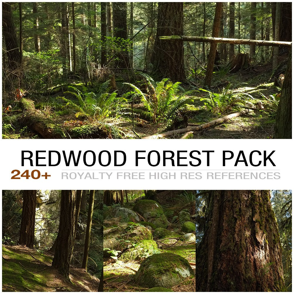 Redwoodforest cover