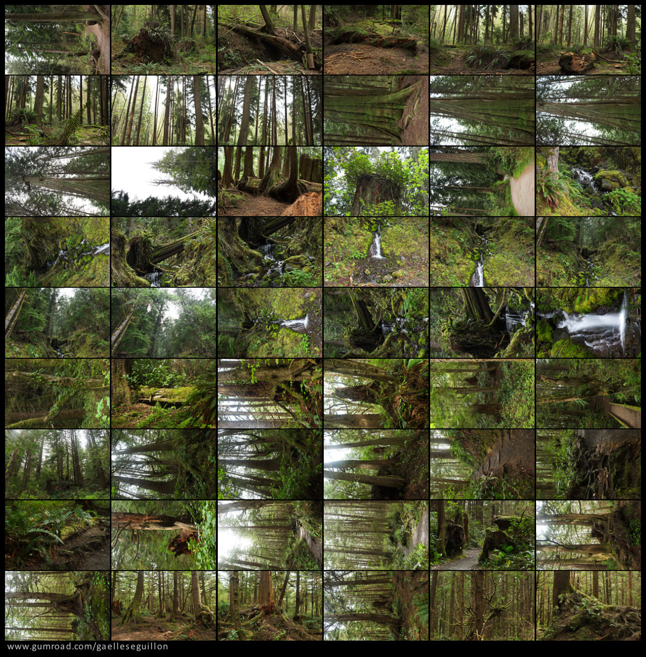 Redwood forest preview 2