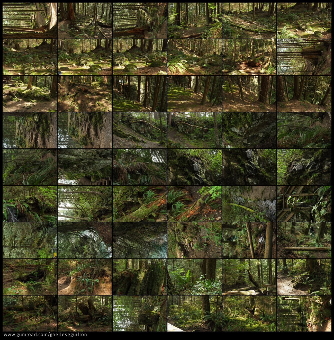 Redwood forest preview 4