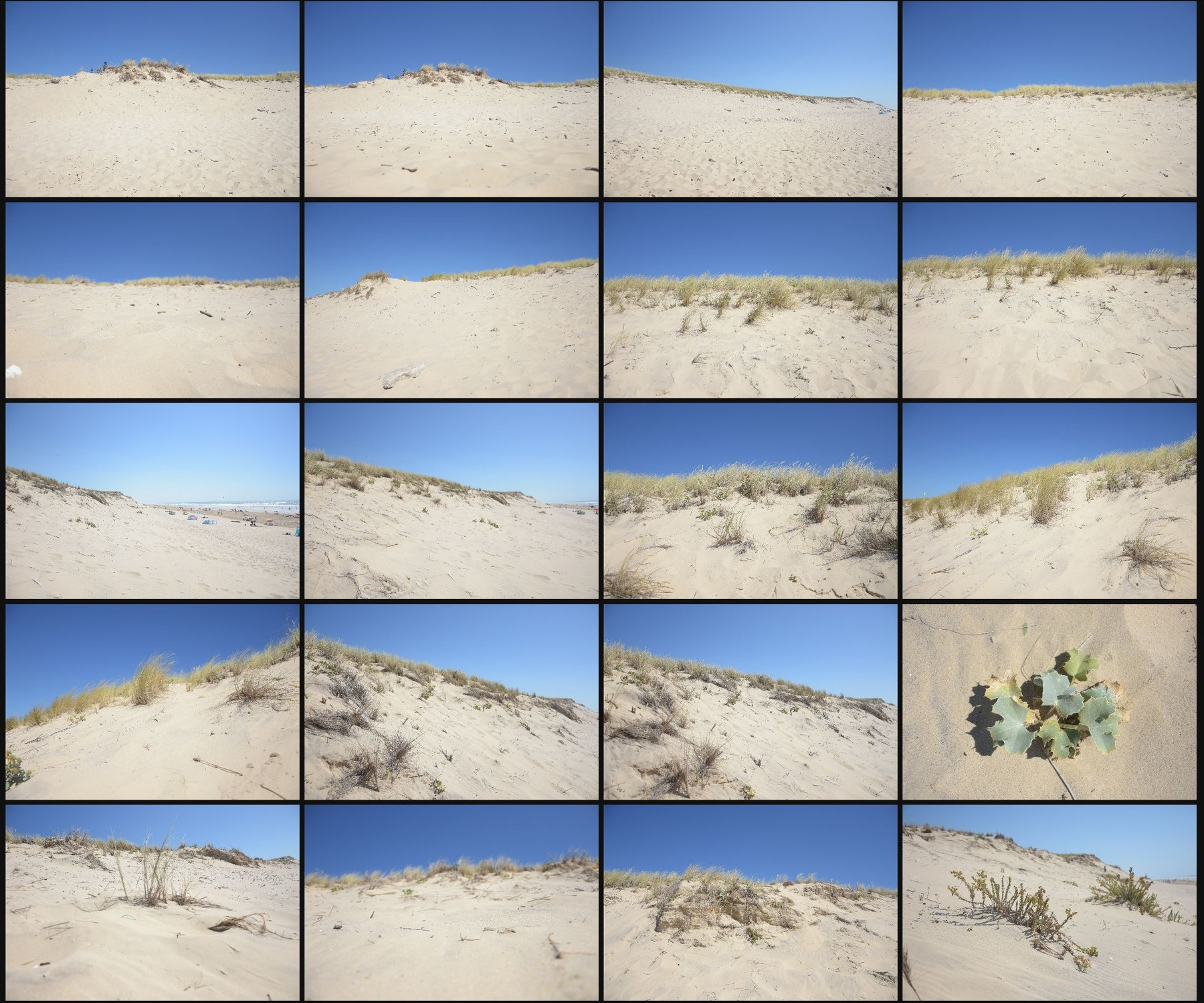 Psd photo reference pack sand dunes 11