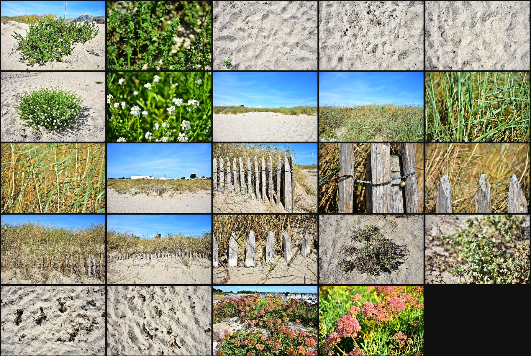 Photo reference pack sand dunes 13