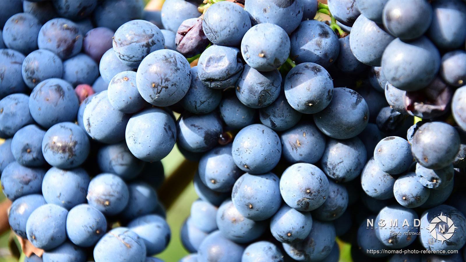 Photo reference pack vineyards volume2 09