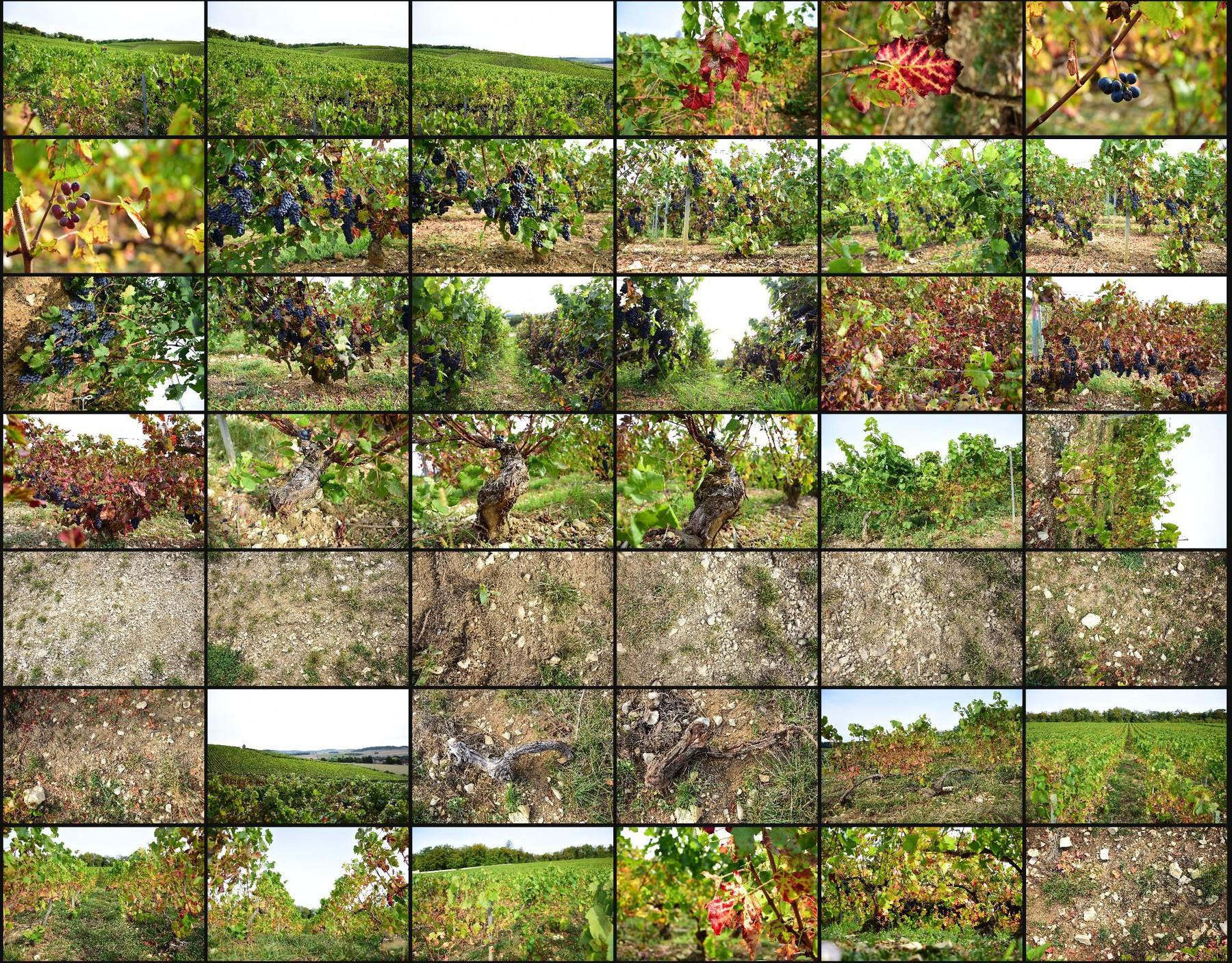 Photo reference pack vineyards volume2 11