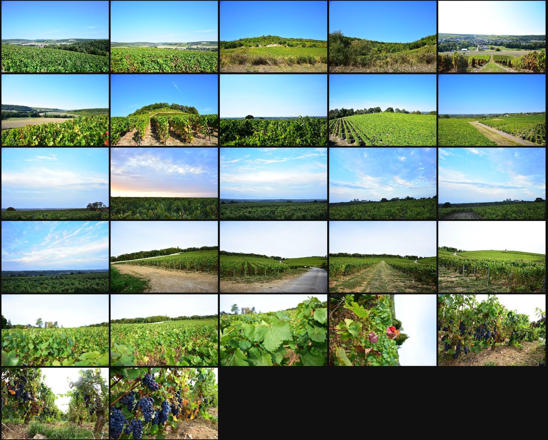 Photo reference pack vineyards volume2 15