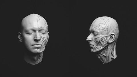 head ecorche