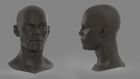 Realistic African Male Head