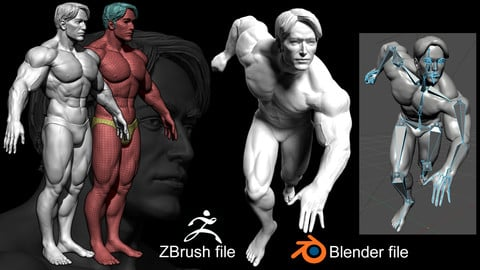 Basemesh Muscular Male