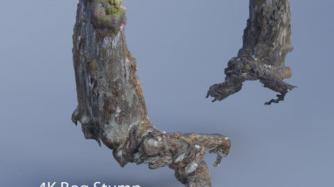 Old Bog Stump