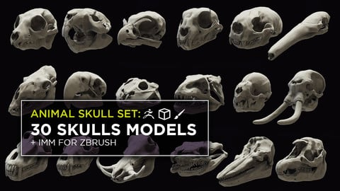 3D Animal Skulls set: 30 skulls + IMM brush