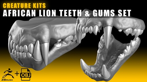 CREATURE KITS: African Lion Teeth & Gums - High Poly OBJ File / ZBrush File with Subdivisions